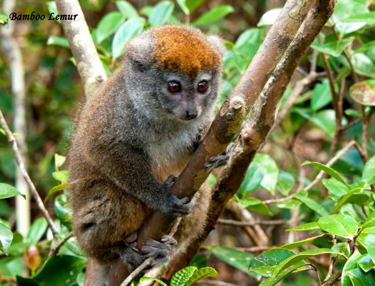 Madagascar-Ann-Kugel-bamboo-l-cal-copy-saadj