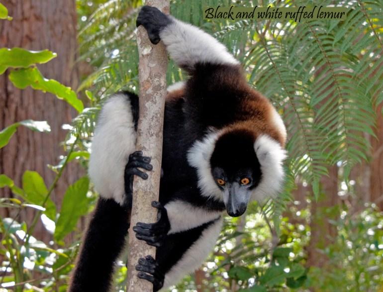 Madagascar-Ann-Kugel-bl-&-wh-calendar-saadj