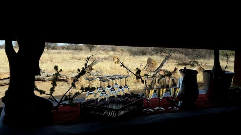 Ultimate-Safaris-Desert-Lion20150910_085449_sm