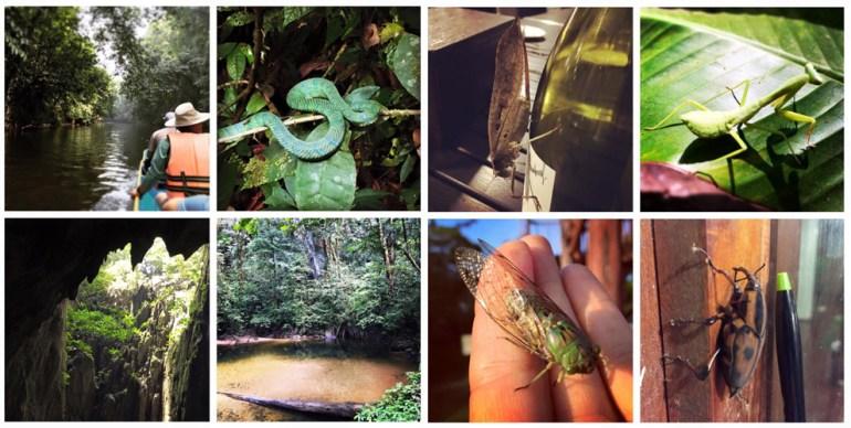Jungle-Bugs