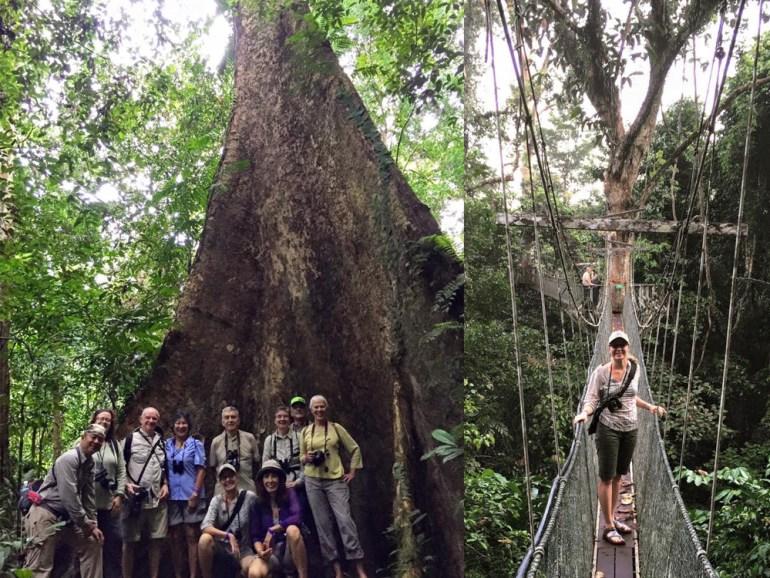 WTGroupinjungle-Karin-in-treetops