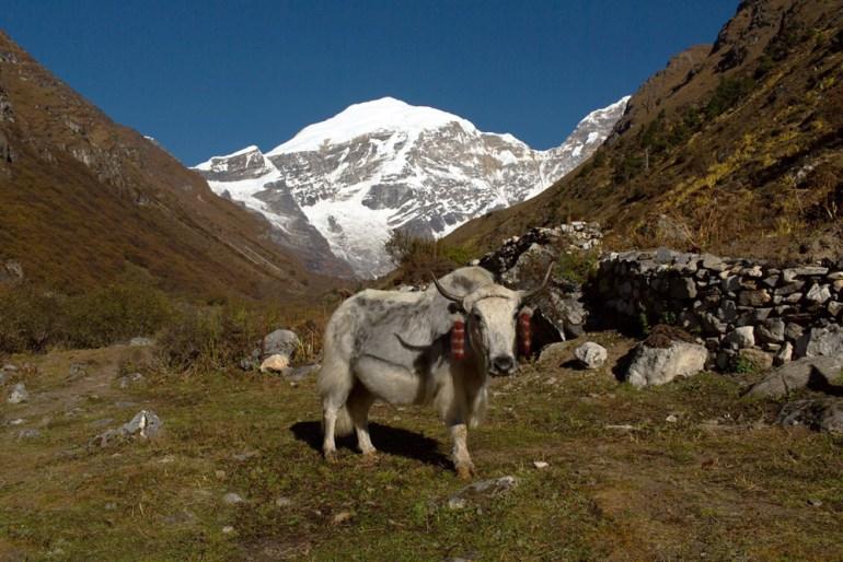 Bhutan-Chomolhari-Trek-Yury-Krylov-46-saadj