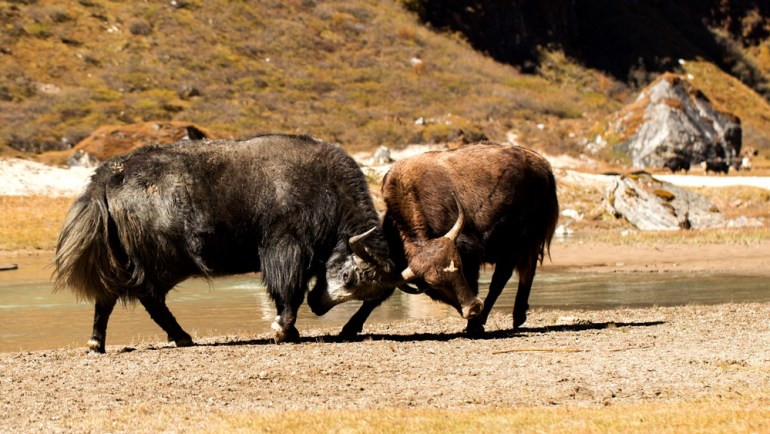 Bhutan-Chomolhari-Trek-Yury-Krylov-60-saadj