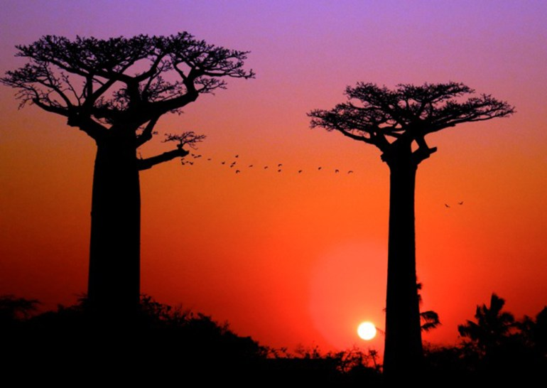 Madagascar-off-the-beaten-path-Pax-ok-Sally-FrancisBaobabs+Birds-big