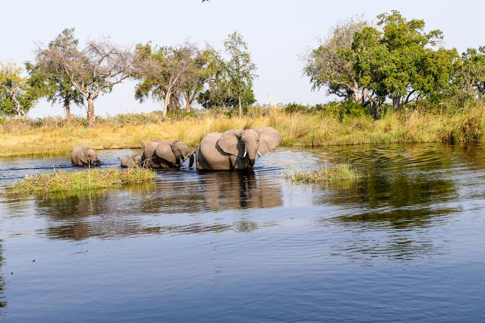 Elephant-Crossing—Xugana