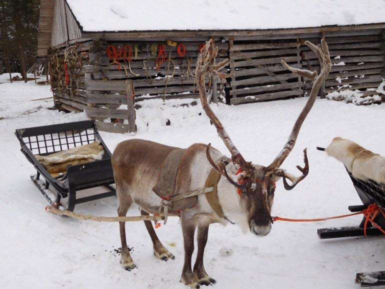 Lappland-David-Angelus-Pax-OK-image3