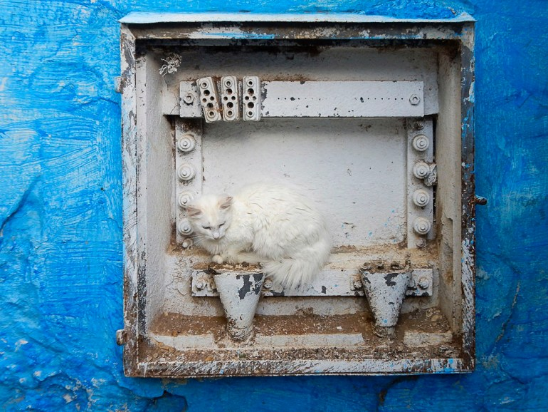 White Cat Camouflage in Meknes