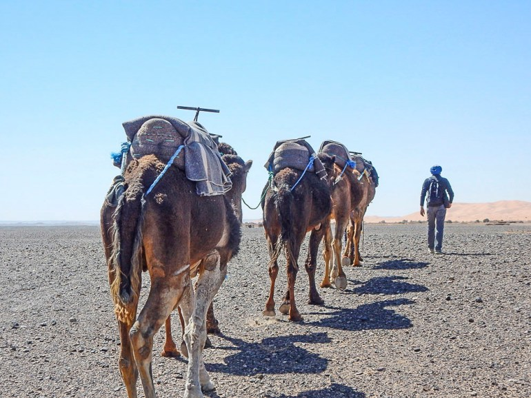 Camel trek through the Sahara