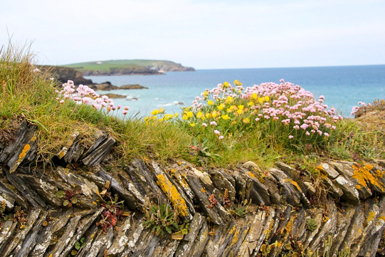 Cornwall-Barbara-Hughey-Pax-OK-IMG_0640-small-CRAdj