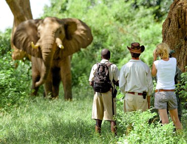Elephant and safari goers in Zambia