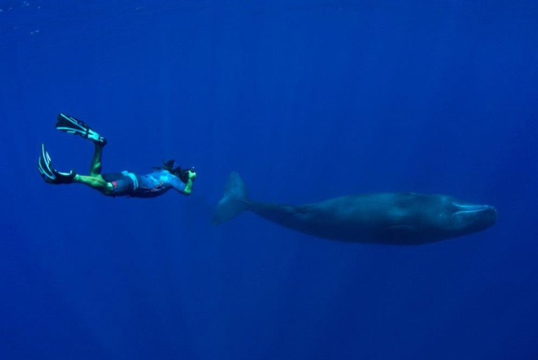 Protecting Palau's Waters