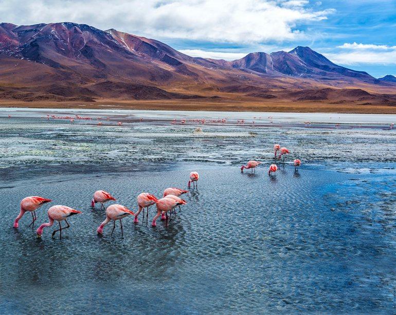 Flamingos in Salar de Uyuni Bolivia