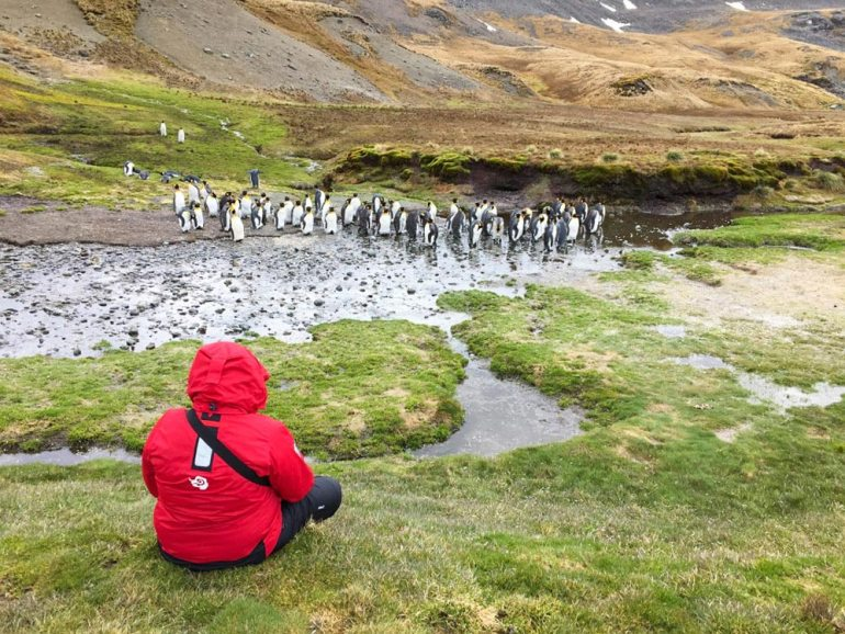 woman sitting next to penguins on South Georgia