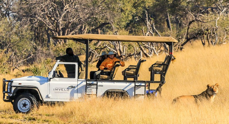 lionness and safari vehicle zimbabwe
