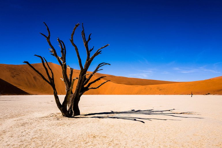 A Journey Through Namibia's Wildlife and Landscapes