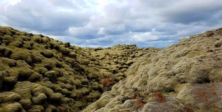 Moss covered lava Iceland