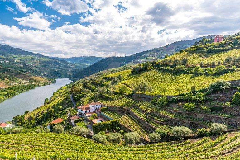 Douro River Vally vineyar Portugal Spring