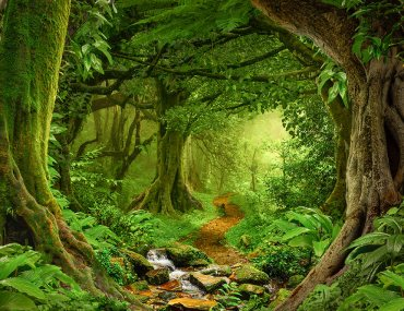 enchanting forest