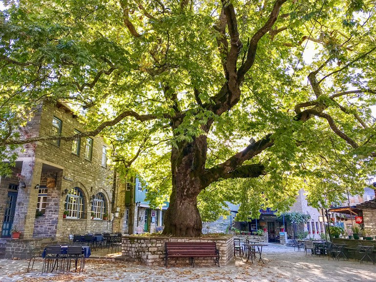 city square with a bench and tree in Greece