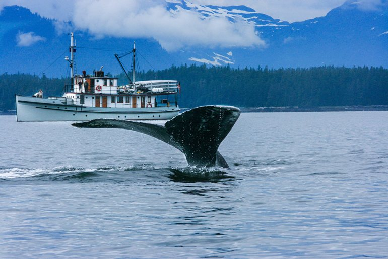 humpback whale tail and boat in the background in Alaska