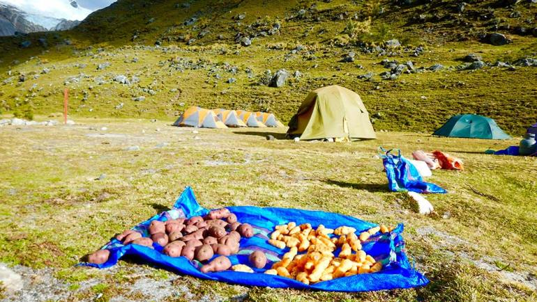 potatoes in the Cordillera Blanca