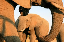 elephants-from-Jozi-blind-Zimbabwe