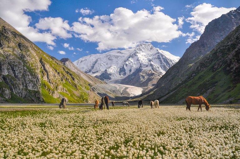 mountainsand horses in Kyrgyzstan