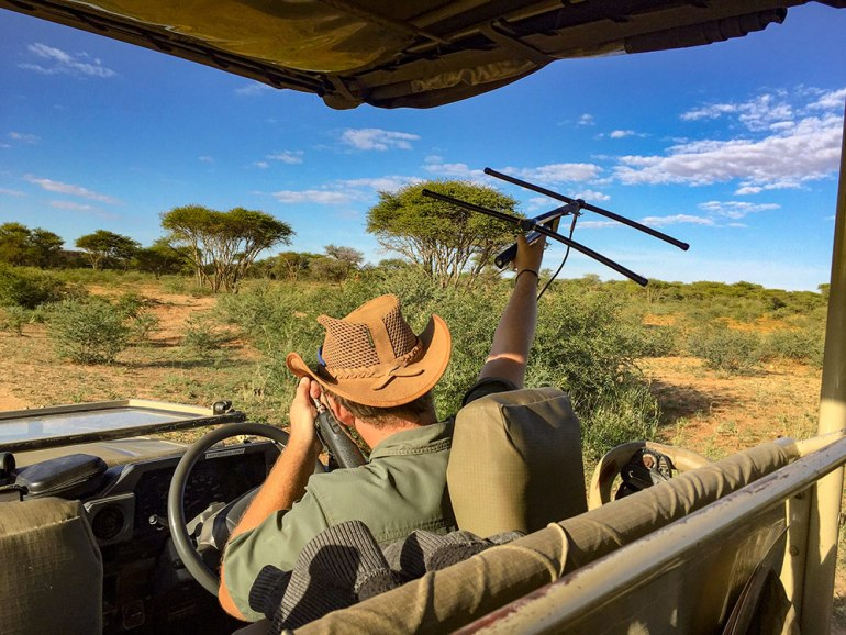 leopard tracking in Namibia