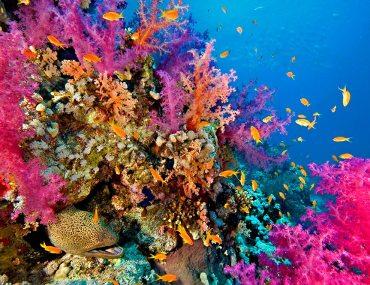 vibrant coral