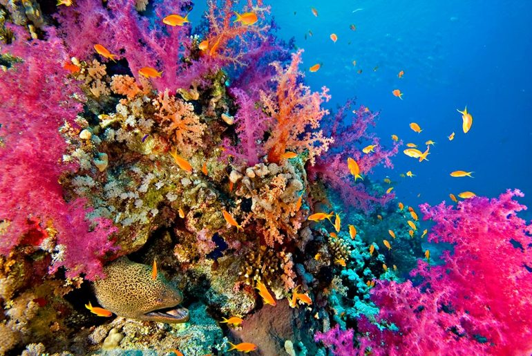 Five Ways to Help Protect Our Oceans