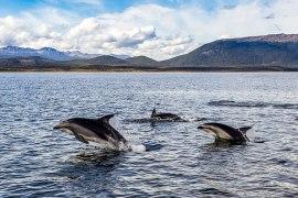dolphins in tierra del fuego patagonia