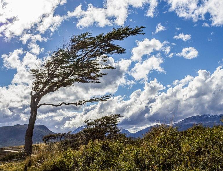 tree in tierra del fuego patagonia