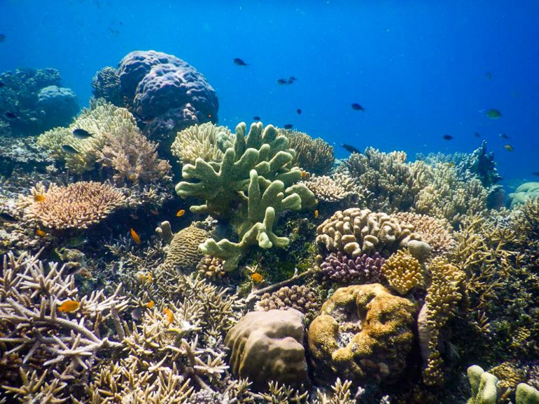 coral and fish in Raja Ampat