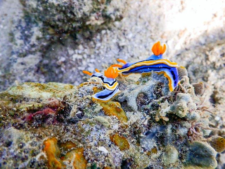 unique underwater wildlife in Raja Ampat