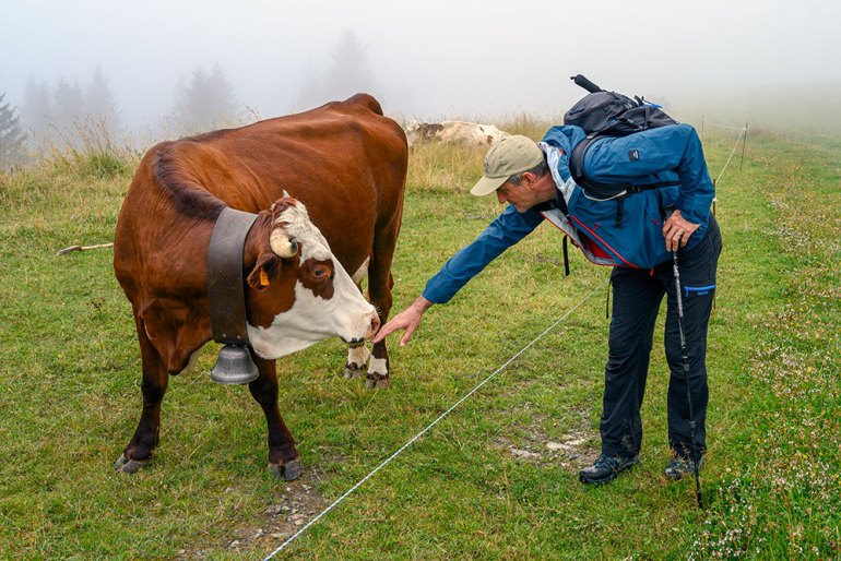 cow on mont blanc to mediterranean