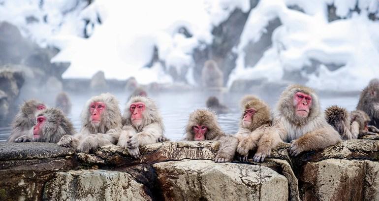 japan hot springs