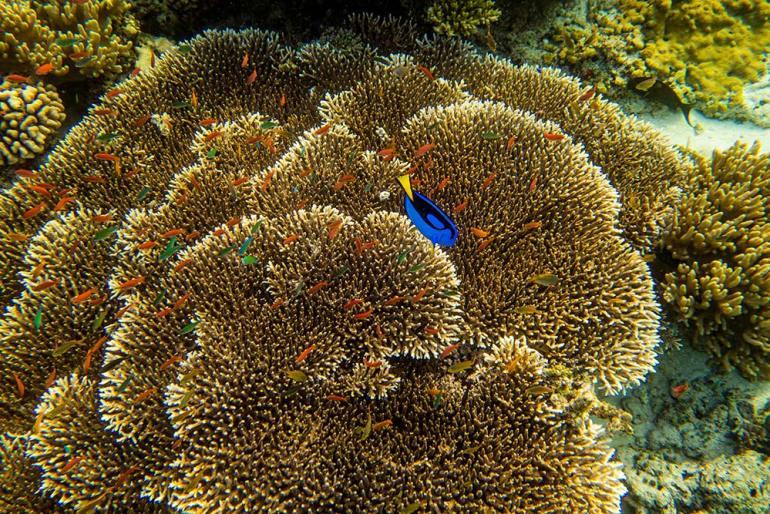 Komodo-coral-fish