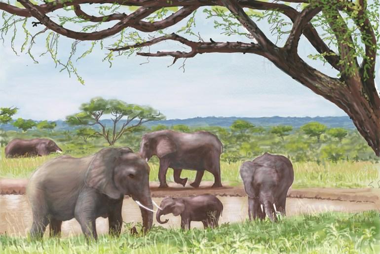 Sketches From Tanzania's Safari