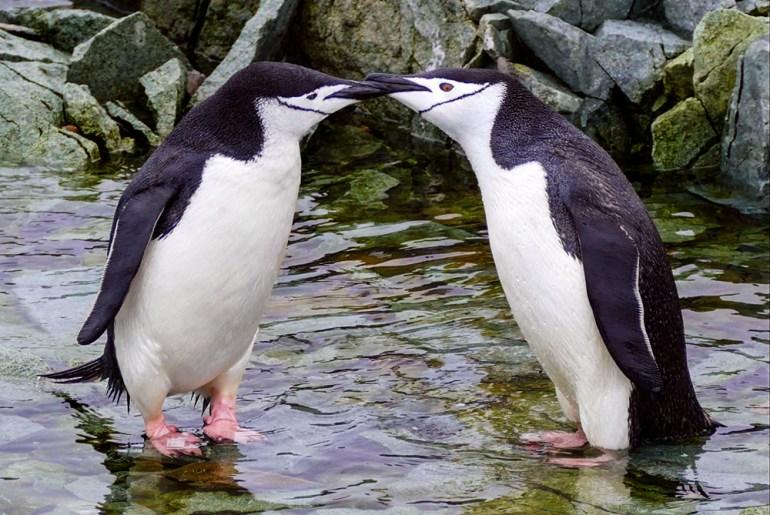 Antarctica's Wild Side