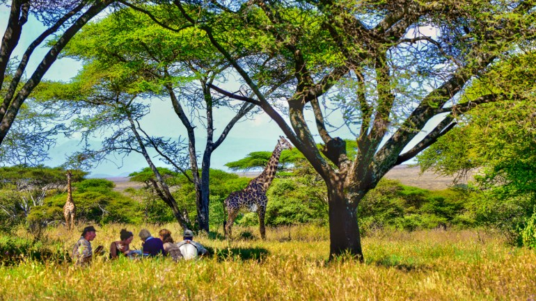 picnic with a griaffe in the serengeti tanzania