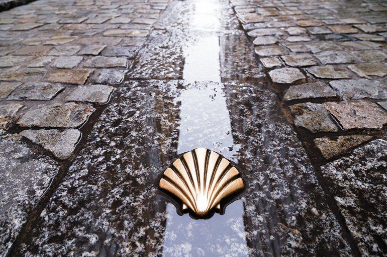 Camino de Santiago scallop shell