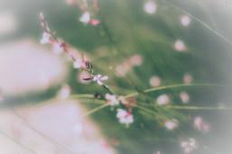 foliage-1-of-1-4