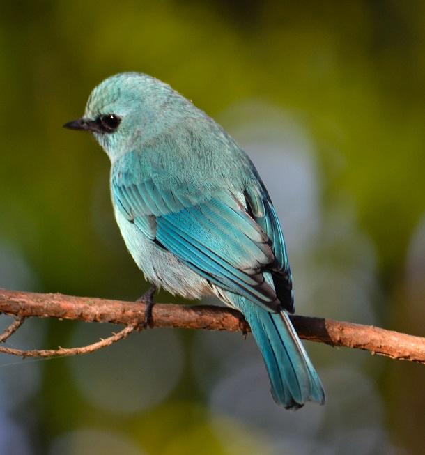 Aperture Priority Bird Photography