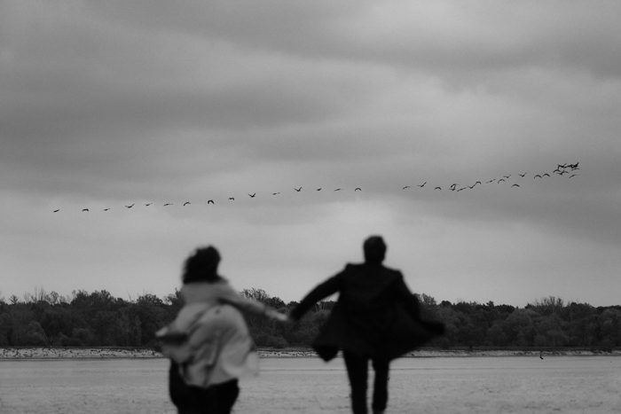 black and white running with birds