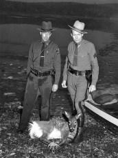 NYS Trooper Sgt. F. Hilfrank & Encon Officer with injured deer 1953 (2)
