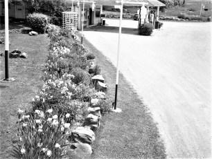 Chet Loonie's Triangle Garage 9G Clermont 1953
