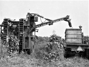Wesley Werner grape harvest Clermont 1973