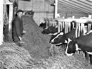Kukon Dairy Farm G'town 1953 (6)