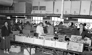 Valley Storage Produce Co. G'town 1955