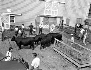 Angus showing at the Minard Rockefeller Farm G'town 1956 (2)